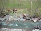 La visite aux poneys