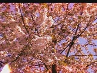 Springtime 2009