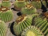 Gran Canaria - Jardín Canario