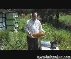 Balcı Yakup Arıcılık ve bal ürünleri