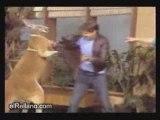 kangaroo qui nique tous le monde
