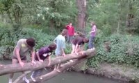4 (5) connards sur un tronc au dessus de l'eau
