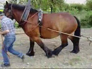 Labour avec cheval- AMAP des Varennes