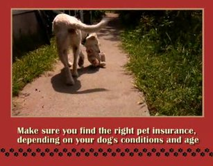 Dog Health Tips on a Budget  (The Complete Healthy Dog Ha…