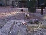 Comment se venger des pigeons ? Blog-videos.org