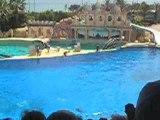 Spectacle de dauphins(3)