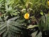 Nantes : Floralies 2009