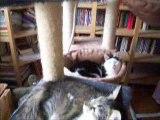 Les chats poussent sur les arbres à chats