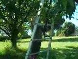 cueillette cerises norah