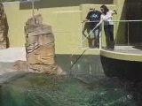 Feeding crocodiles at crocosaurus cove darwin