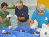 Les tortues de Nouvelle Calédonie