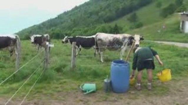 Domaine Barmès Buecher - Compost 2009
