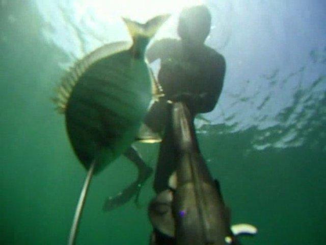 chasse sous marine: Sars