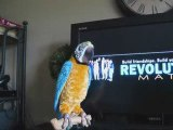bloopers Mike  Lavoie Todd Connell Revolutionary Matrix