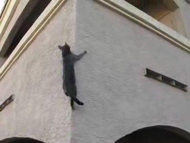 Souris Grimpe Au Mur chat qui grimpe sur un mur - vidéo dailymotion