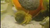 Snails escargots geants ocean