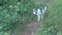 Tino le chat en promenade avec Océane et Baika les chiens