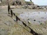 La Bernerie en Retz : algues