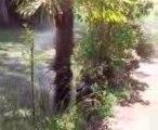 Berger allemand: shadow 5mois aime déjà les jets d'eau ^^ 2