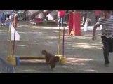 Bango Jumping Agility Dagneux 21/06/2009